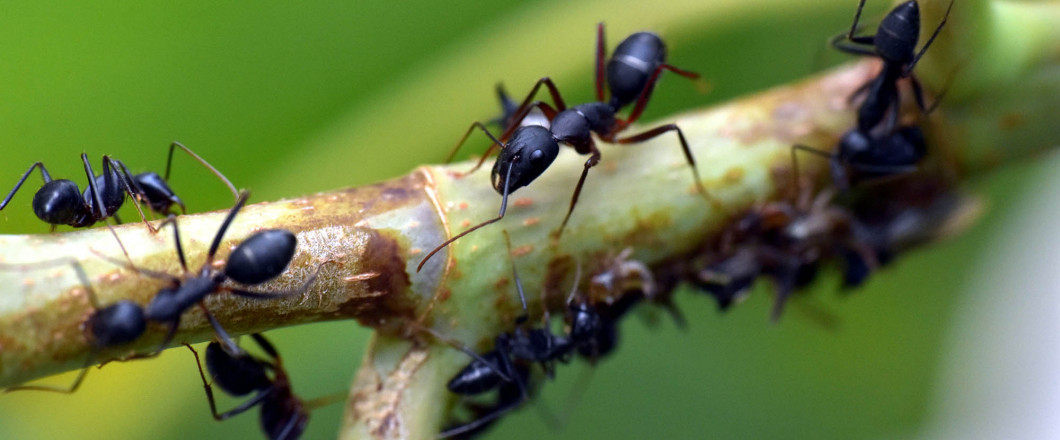 Are You Dealing With Pesky Bugs and Pests?