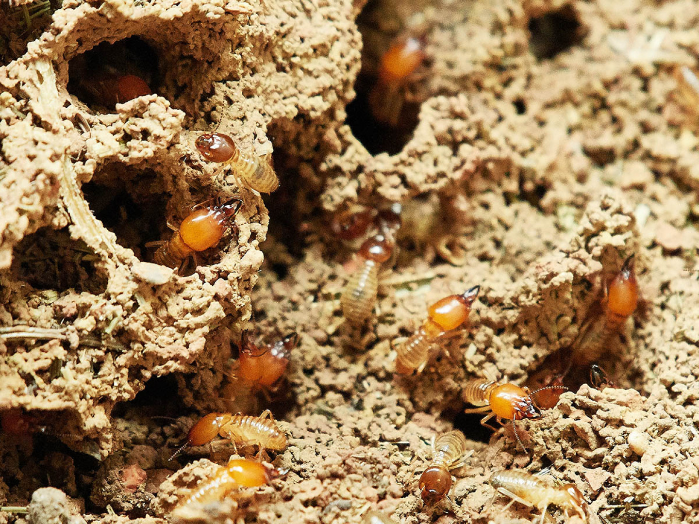 Protect Your Property From Termites